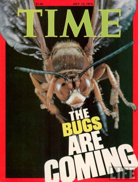 timebugs1